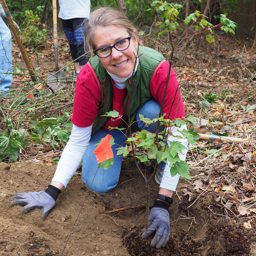 Planting Sherrin Woods