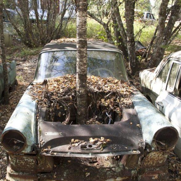 Tree Growing in Car